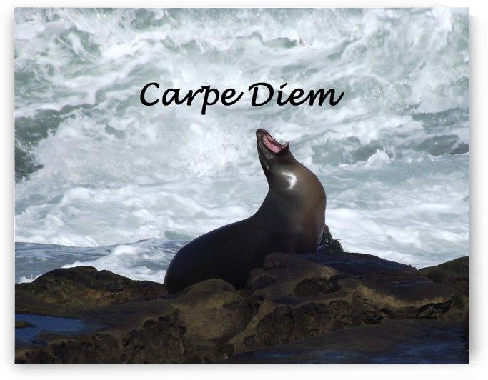 Carpe Diem Seal by Linda Peglau