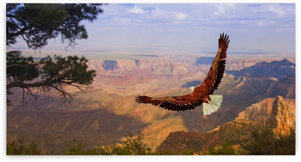 Eagle takes flight over Grand Canyon USA by Bruce Rolff