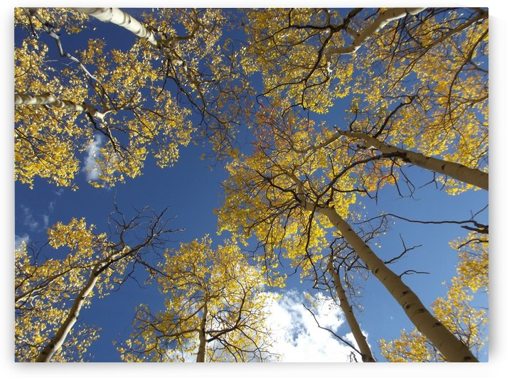Aspens To Heaven by Linda Peglau