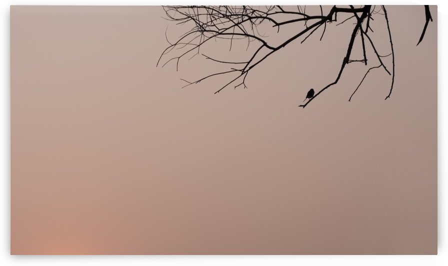 Silhouette of bird and twigs by Krit of Studio OMG