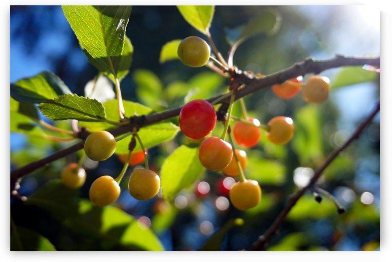 Cherries by Nyvelius