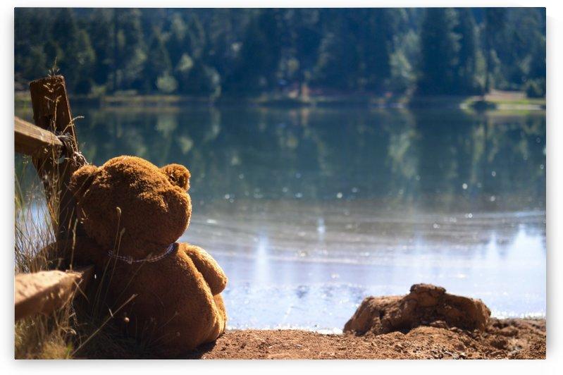 Teddy by Vlad Kochanzhi