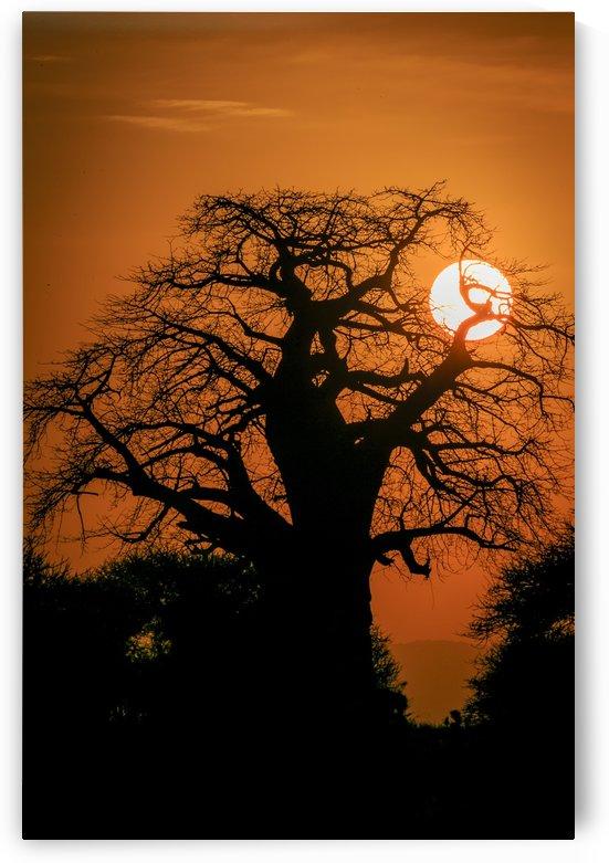 Baobab Sunset by JADUPONT PHOTO