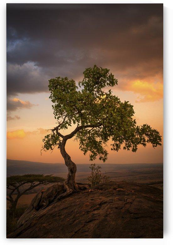 Tree of Life by JADUPONT PHOTO