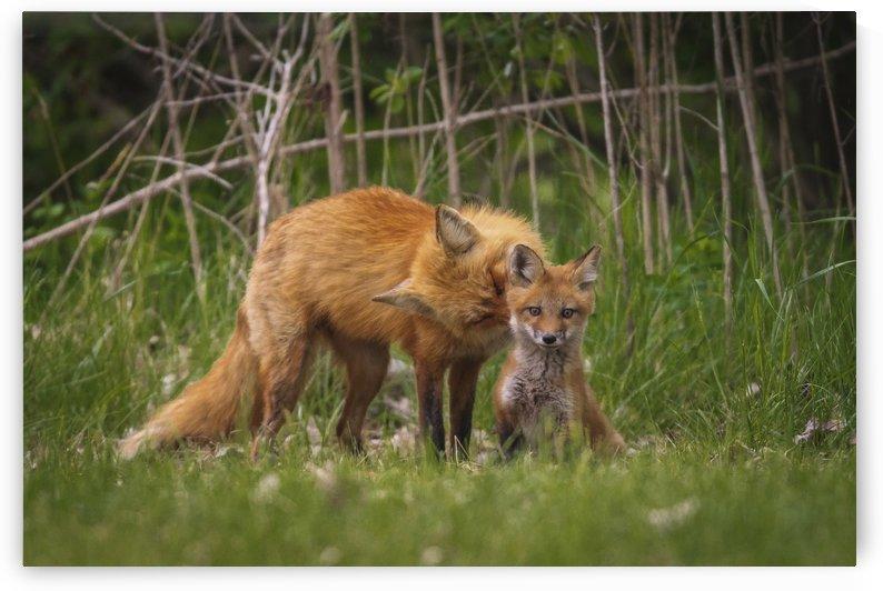 Motherly Love by JADUPONT PHOTO