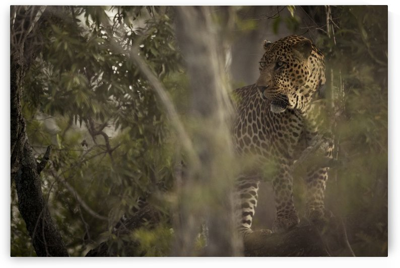 Ghosts of the Serengeti by JADUPONT PHOTO