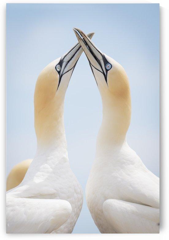 Perfect Harmony by JADUPONT PHOTO