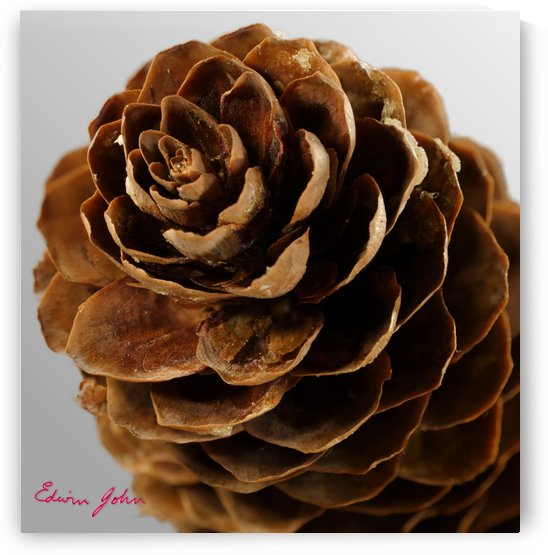 Wooden Petals of a Pine Cone by Edwin John
