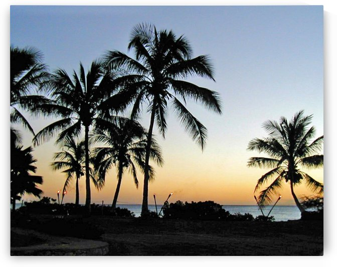 Tropical Sunset 2 by Jodi Webber