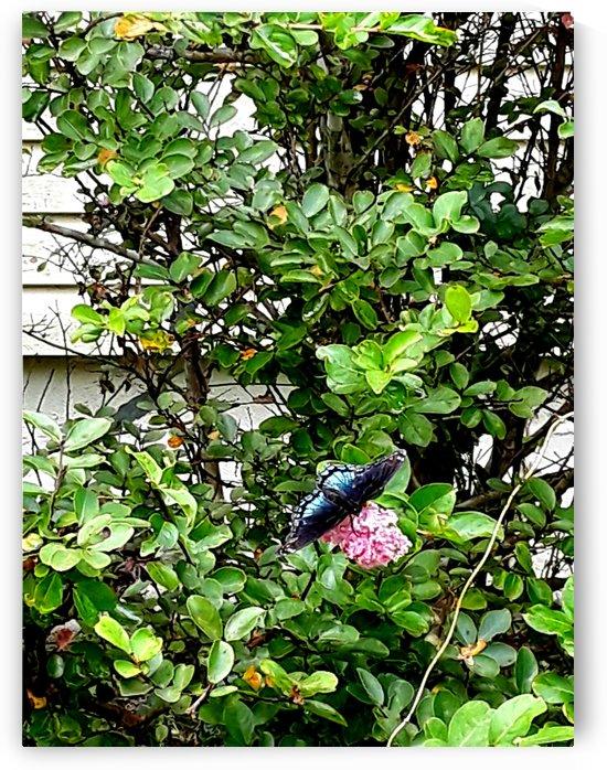 Blue Tail Swallow  by Debbie-s Photo Korner