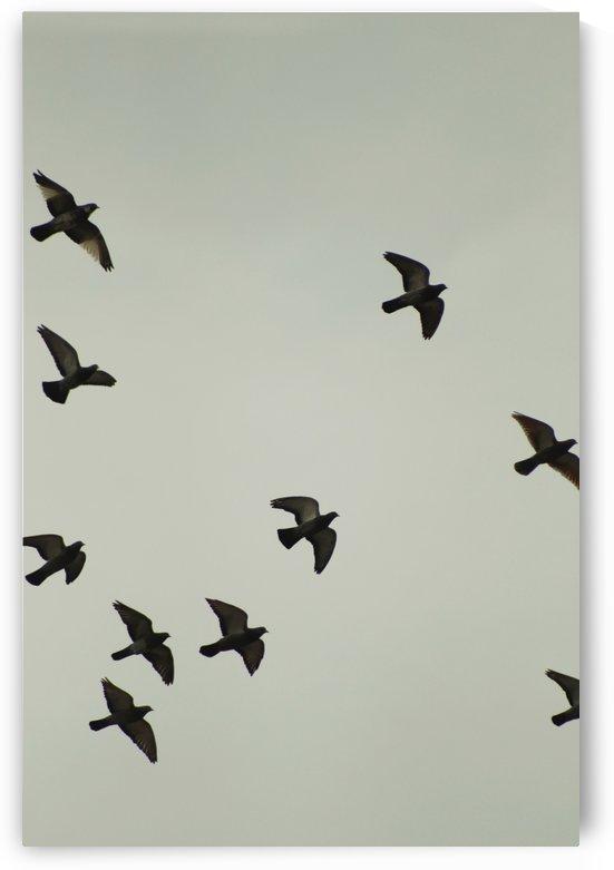 Birds by Andrea Pratnemer