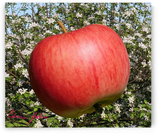 An Apple a day keeps the doctor at bay by Edwin John