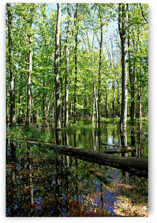 Wild Goose Woods Pond III by Deb Oppermann