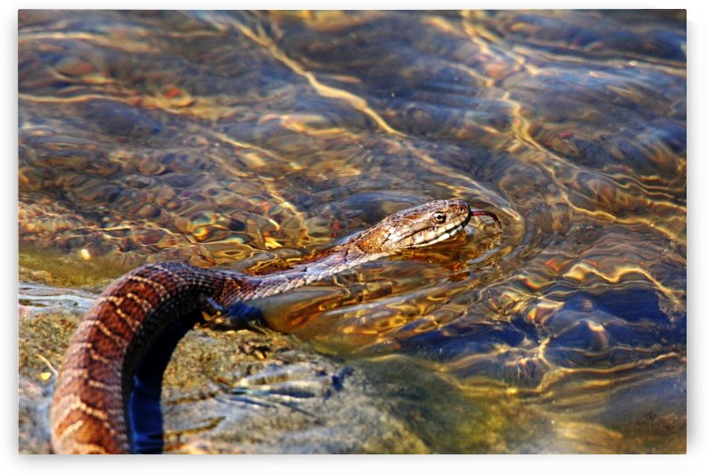 Northern Water Snake Tongue Sensor by Deb Oppermann