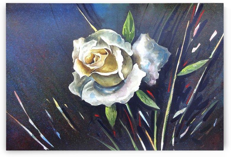 Rose 5 by Sumit Datta
