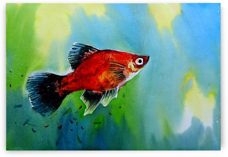 Fish 1 by Sumit Datta
