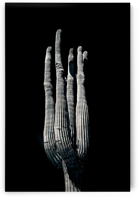 Saguaro 2 by East by Light