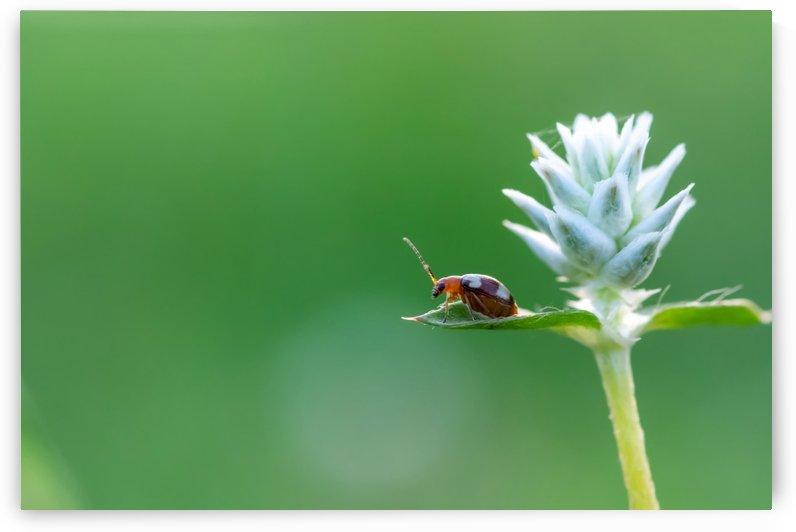 Red bug on green leaf by Krit of Studio OMG