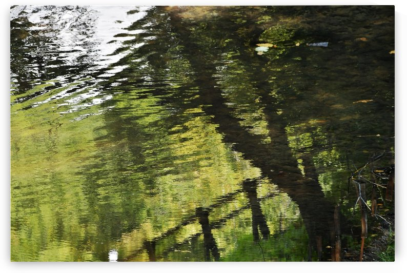 DSC_9991 by Zoltan Balog