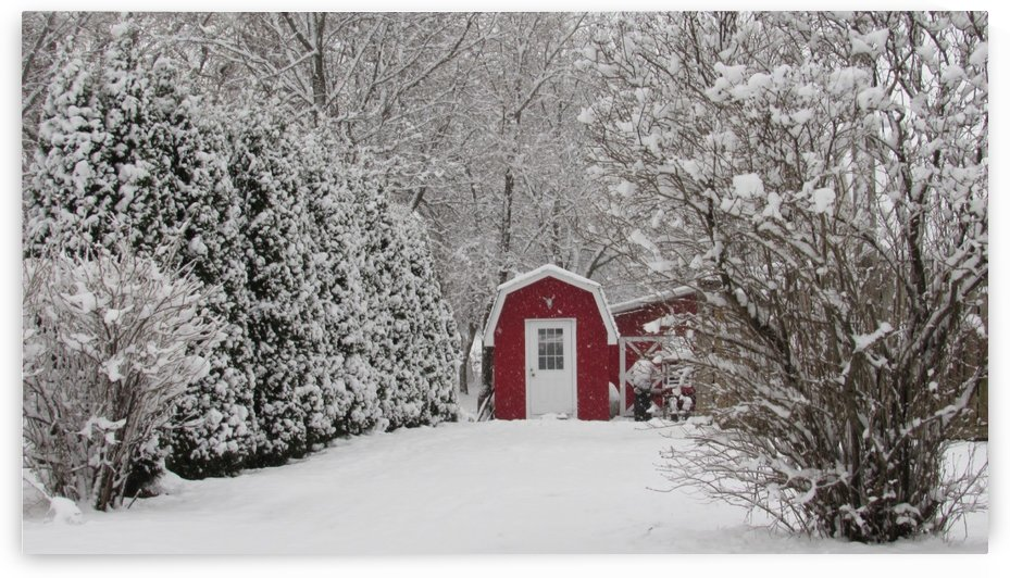 Red Shed by Ljphoto