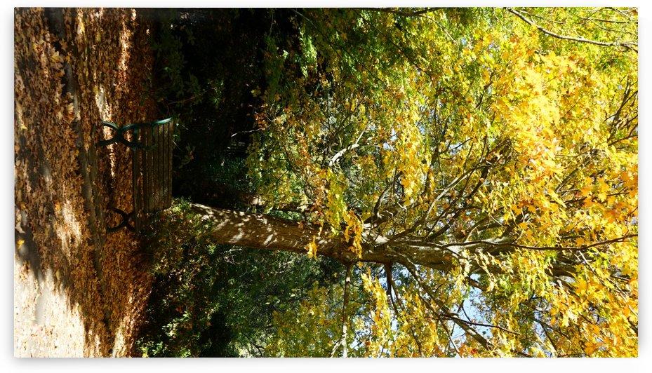 Autumn Romance by Viraj S Nair
