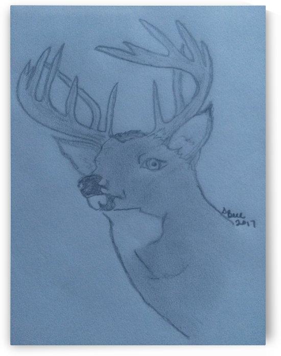 Maine Deer by Bells Paintings