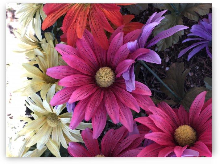 Rainbow of flowers by Purplehaze_Photography