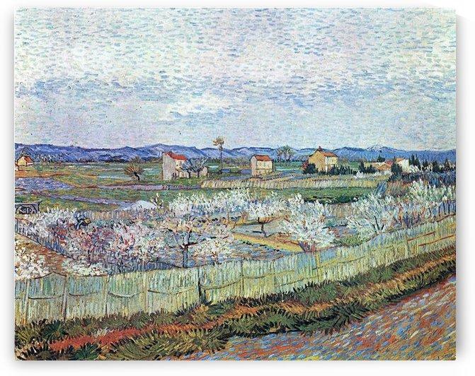 La Crau near Arles with blossoming peach trees by Van Gogh by Van Gogh