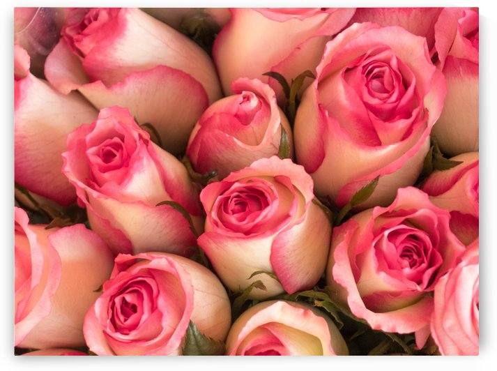 Pink and white roses by Asia Visions Photography