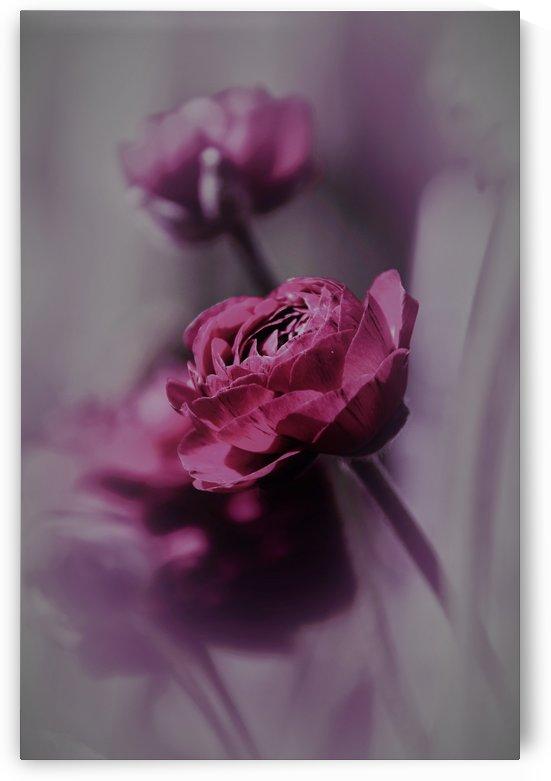 purple bliss by Anu Hamburg