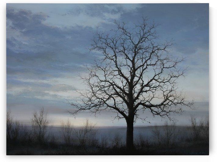 The Lone Oak by Sang H Han