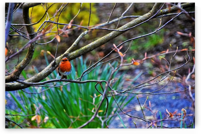 Spring memories by Anu Hamburg