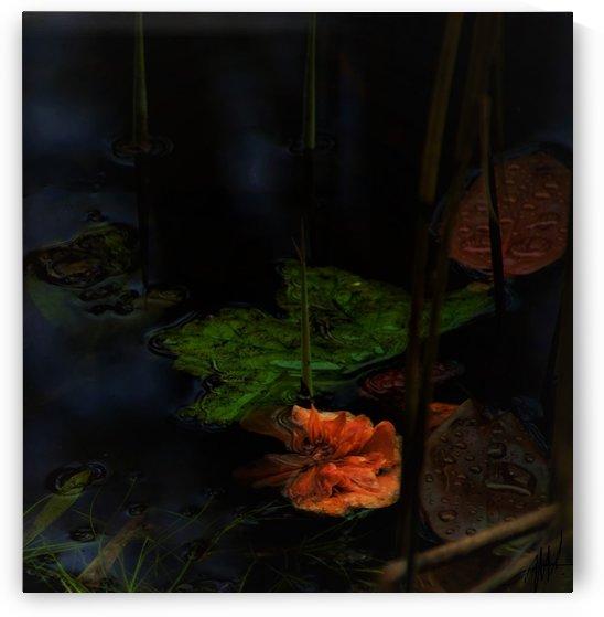 pond life 2 by Anu Hamburg
