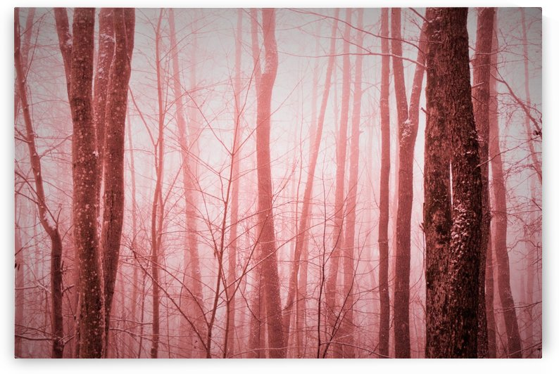 trees in pink by Anu Hamburg