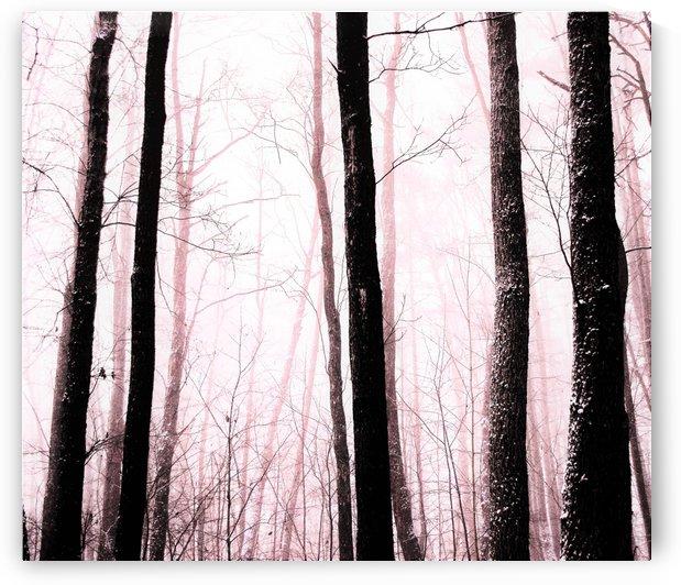 misty trees by Anu Hamburg