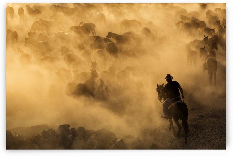 Cappadocia wild horses by 1x