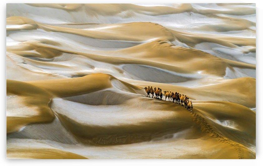 Desert Winter by 1x