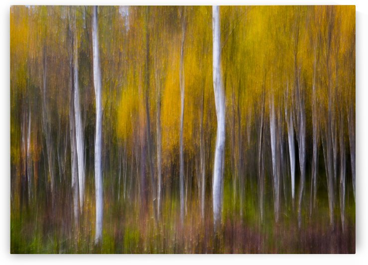 Abstract Fall by 1x