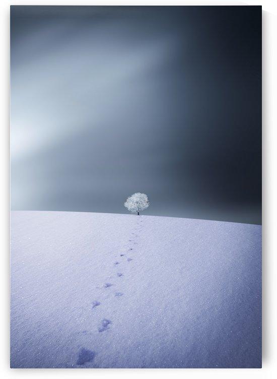 Winter by 1x