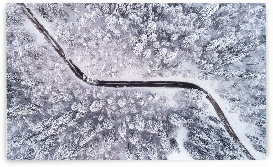 Road through the winter forest by 1x