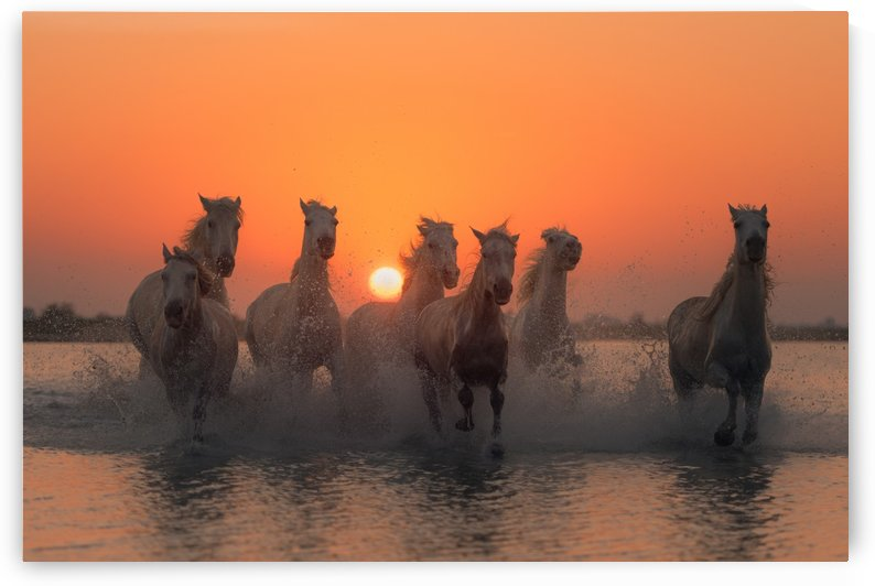 Sunset in Camargue by 1x