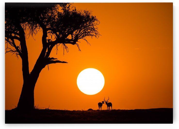African Sunset by 1x