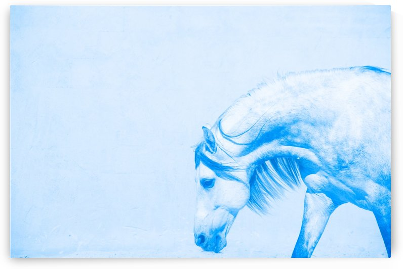 Blue Andalusian Horse 6 by Millersreflections