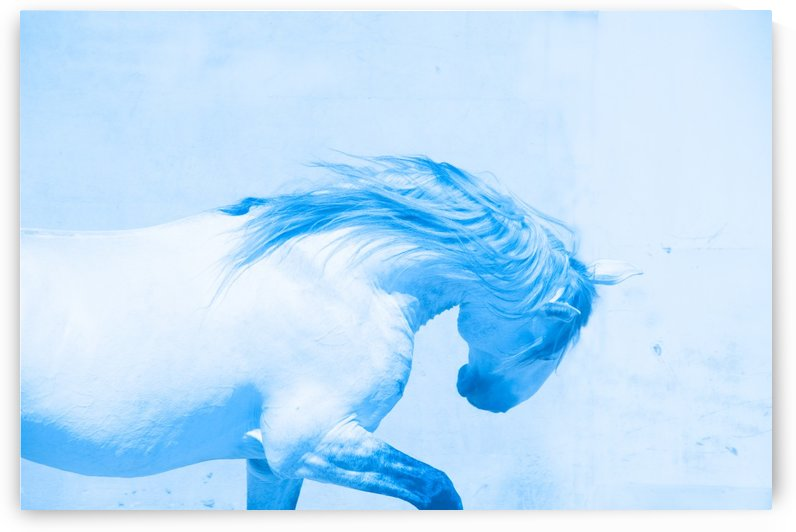 Blue Andalusian Horse 5 by Millersreflections