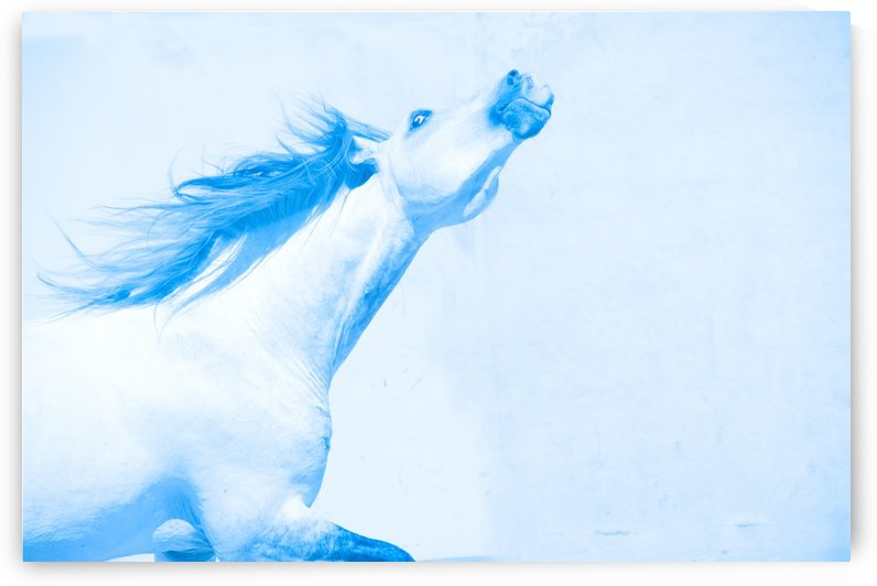 Blue Andalusian Horse 4 by Millersreflections