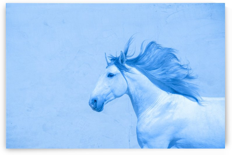 Blue Andalusian Horse 2 by Millersreflections