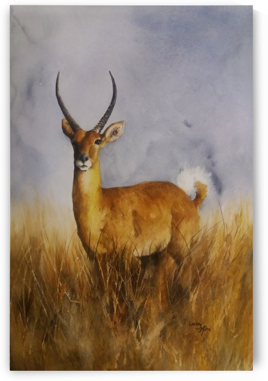 Waterbuck by Lesley Milne