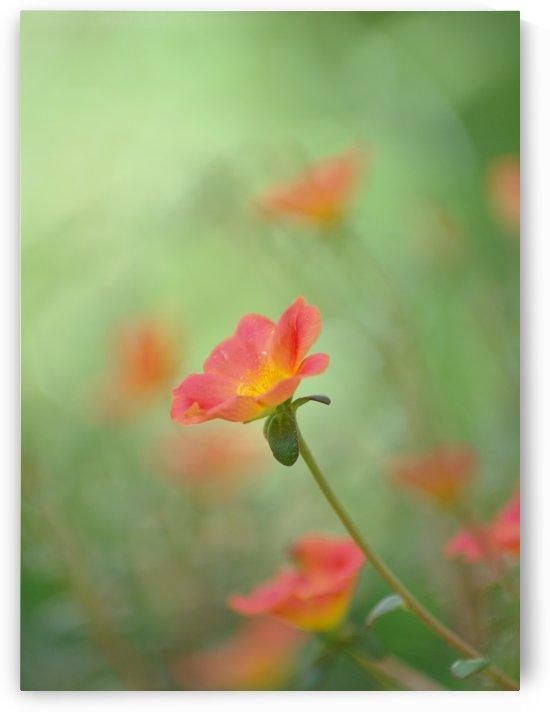 Pastel color flower by Krit of Studio OMG