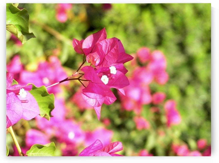 Flower39 by Jodi Webber