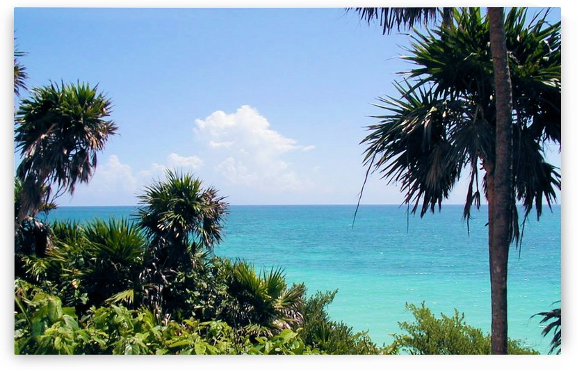 Tropical6 by Jodi Webber